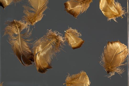 Goldene Federn eingegossen in Acrylglas
