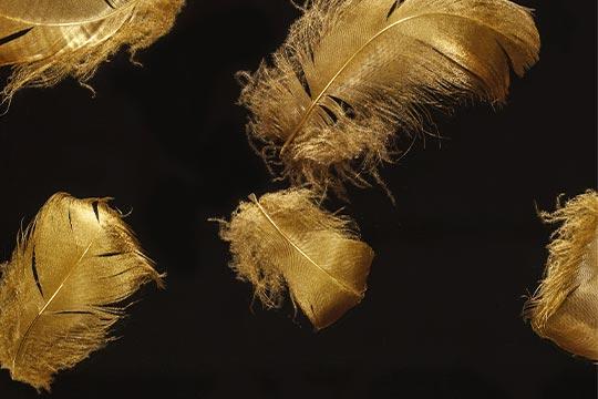 Goldene Federn im Acrylglas