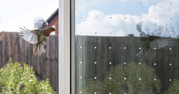 Vogelschutz an Glasscheiben mit SEEN Elements